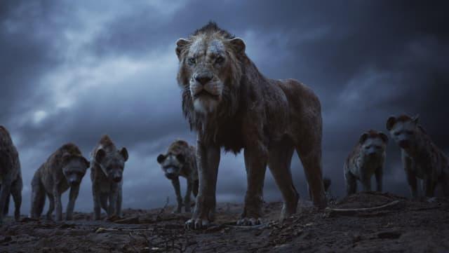 Ein Löwe steht vor einer Horde Hyänen.