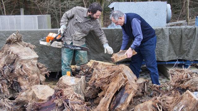 Das Holz der rund 200 Bäume ist zwischen 13'000 und 14'000 Jahren alt.
