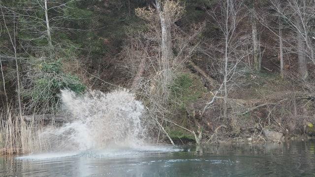 Ein Baumstamm gleitet in den See.