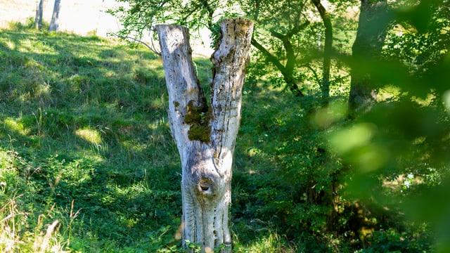 Ein Baumstumpf in der Landschaft.