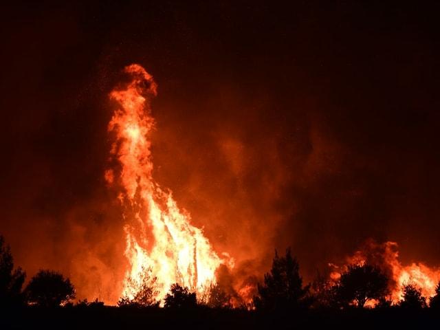 Una fiamma alta era visibile vicino ai cespugli.
