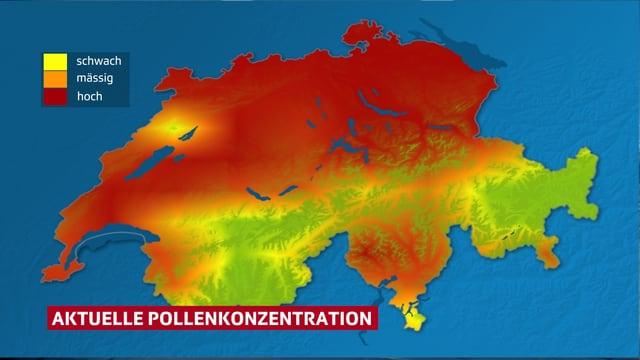 Eine eingefärbte Karte der Schweiz zeigt die starke Pollenbelastung.