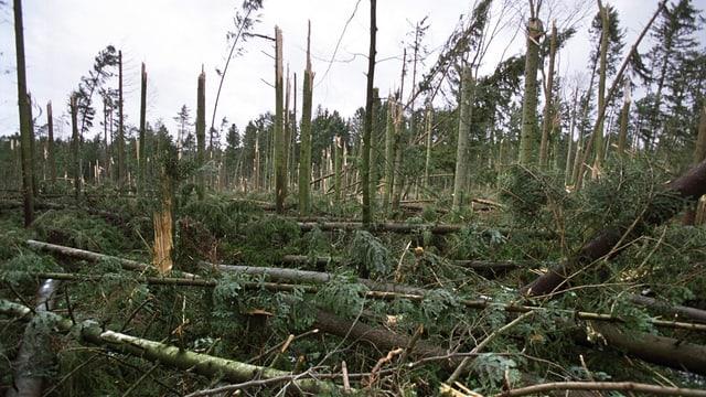 Massenhaft umgeknichte Bäume.