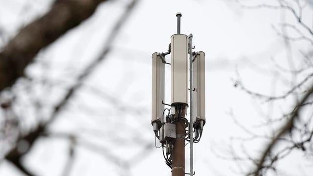 Eine Mobilfunkantenne im Bild, im Vordergrund Äste von Bäumen