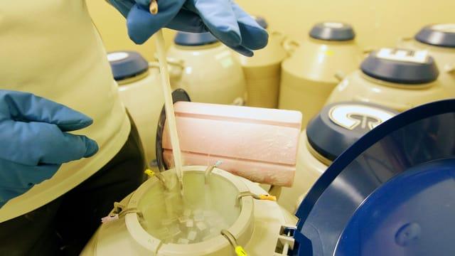 In ein offenes Gefriergefäss mit flüssigem Stickstoff werden Eizellen eingelegt.