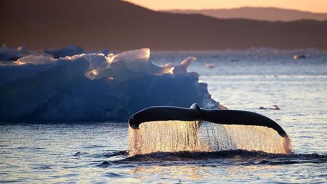 Russland will Wale und Delfine besser schützen – mit Hintertür
