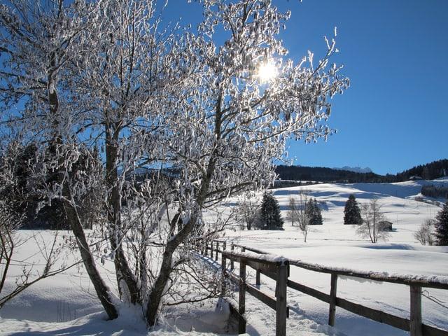 Verschneite Winterlandschaft rund um Gonten bei wolkenlosem Himmel.