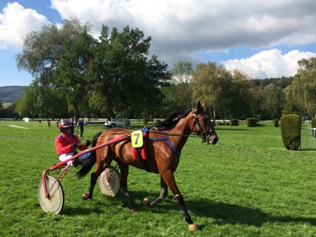 Pferdgespann und Jockey