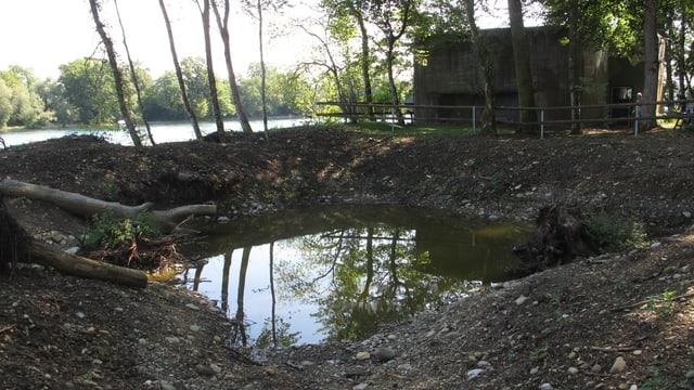 Ein neuer Amphibienteich am Rheinufer.