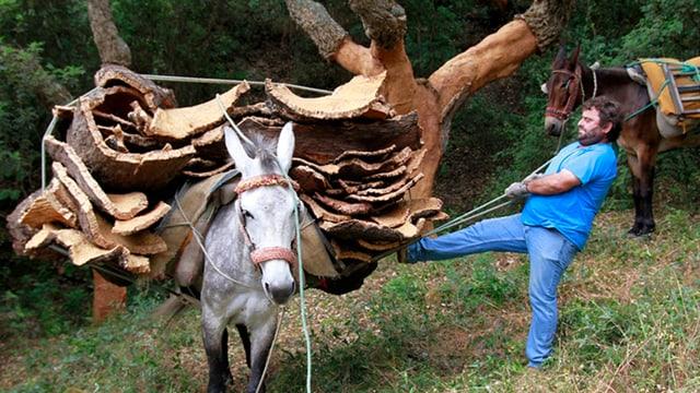 Video «Frühmorgens in den Korkwäldern von Los Alcornocales» abspielen