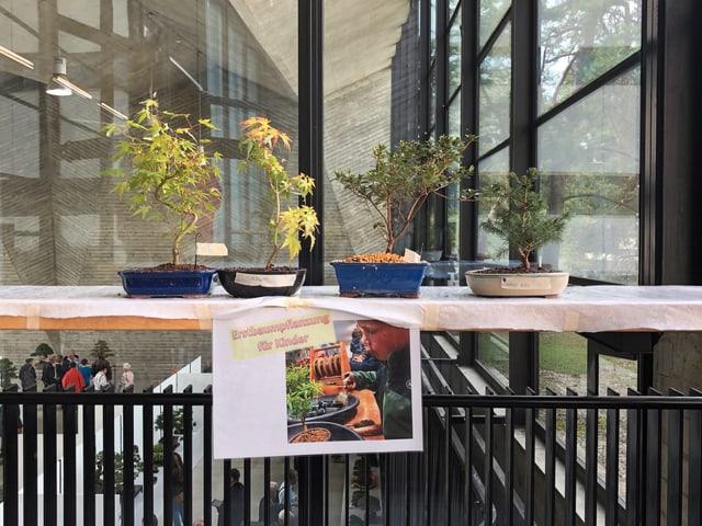 Bonsai Ausstellung Basel