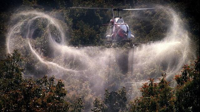 Ein Hubschrauber versprüht Pflanzenschutzmittel über einer Avocado-Plantage in Kalifornien.