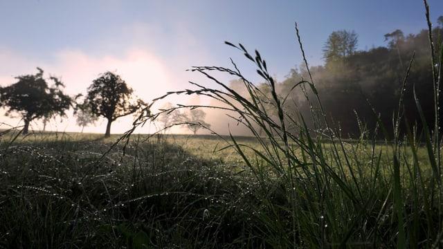 Die Sonne scheint auf nasse Gräser, im Hintergrund steigt sogar Nebel auf.