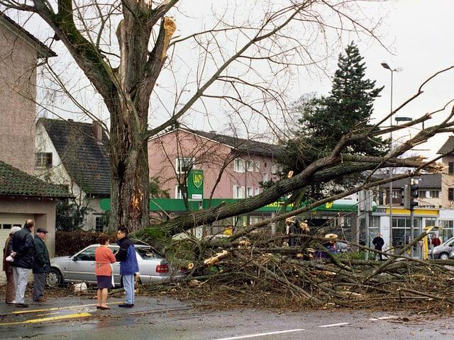 Menschen betrachten umgestürzten Baum auf der Strasse