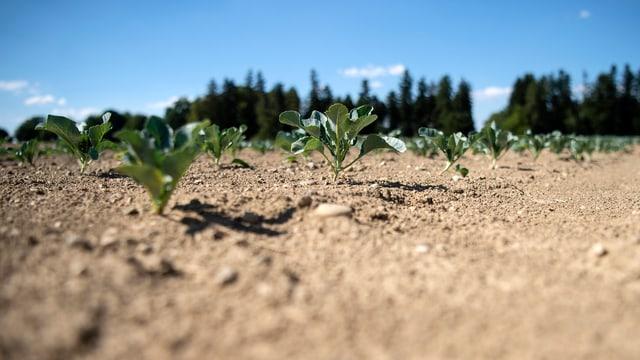 Ein Feld mit trockener Erde.