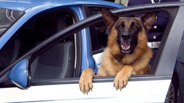 Kommissar Rex in einem Polizeiautor