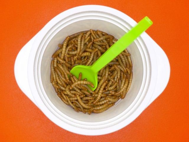 Mehlwurm-Larven in einer weissen Plastikschüssel.