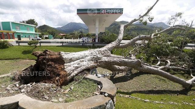 Ein mächtiger Baum liegt entwurzelt auf dem Boden.