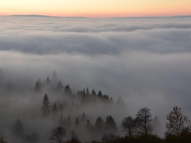 Neblschicht von oben, ein paar Fichten ragen aus dem Grau.