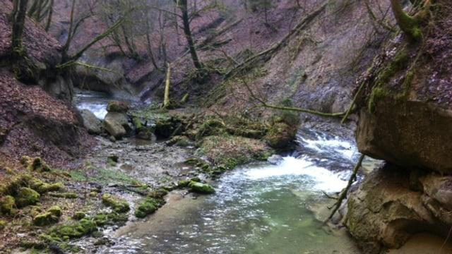 Blick ins Galterntal: Ein Bach schlängelt sich durch den Wald