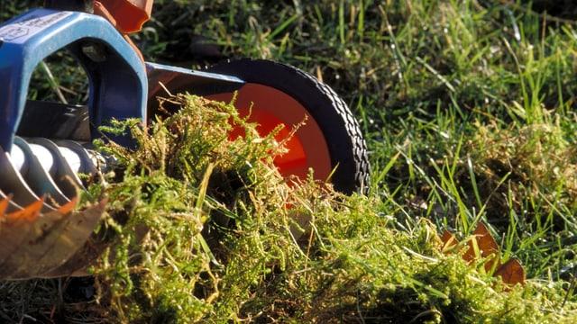 Rasen mit Moos