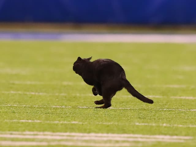 Schwarze Katze im MetLife-Stadion.
