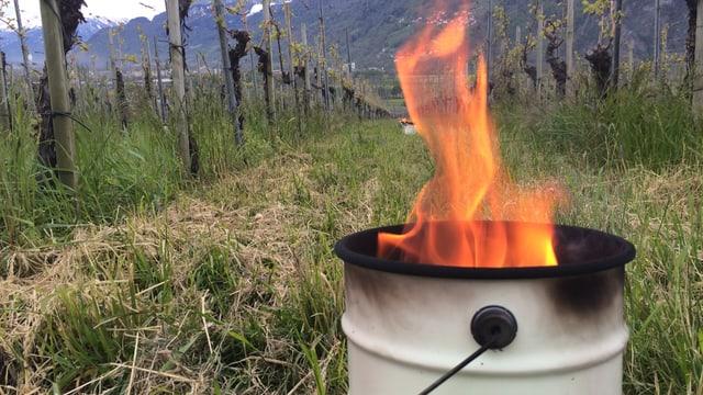 Eine Wachskerze brennt im Rebberg