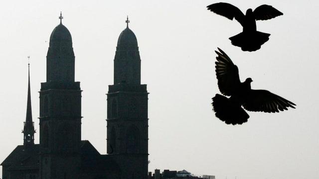 Tauben vor Grossmünster.