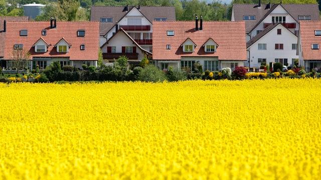 Einfamilienhäuser, davor ein Feld mit gelbem Raps-