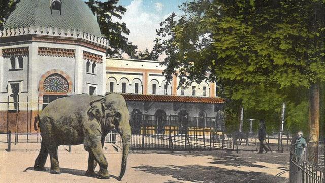 Alte Postkarte mit einem Elefanten.