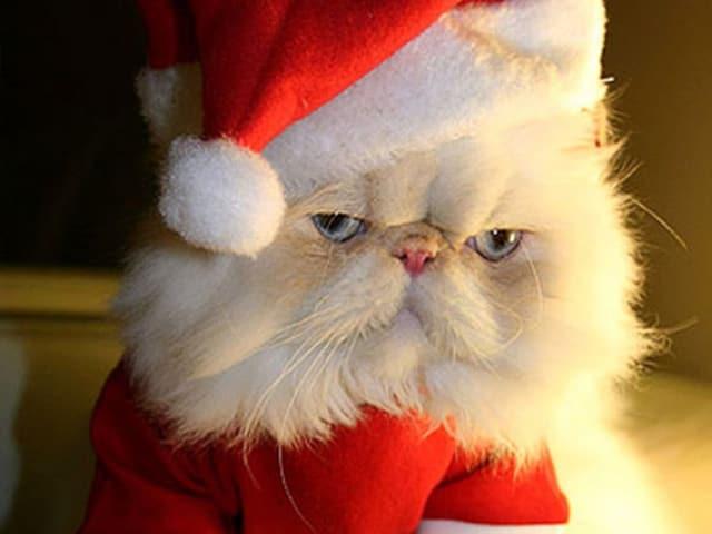 Weihnachten ist meine Leibspeise. Not.
