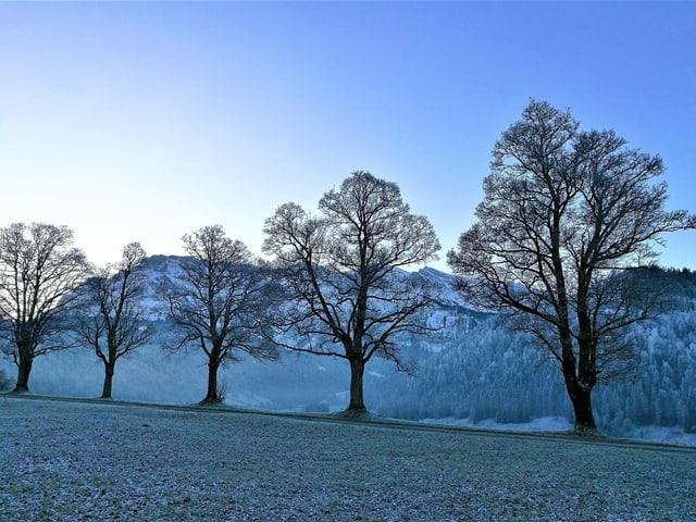 Bäume und Wiesen sind mit reif bedeckt.