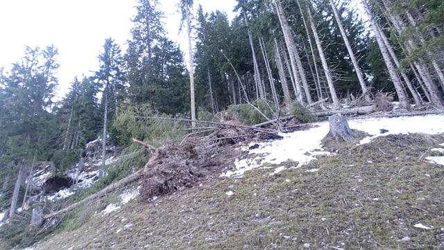 Era qua, al Culm da Latsch sur Bravuogn, èn derschidas diversas plantas pervi dal vent.