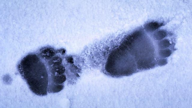 Bärenspur im Schnee.