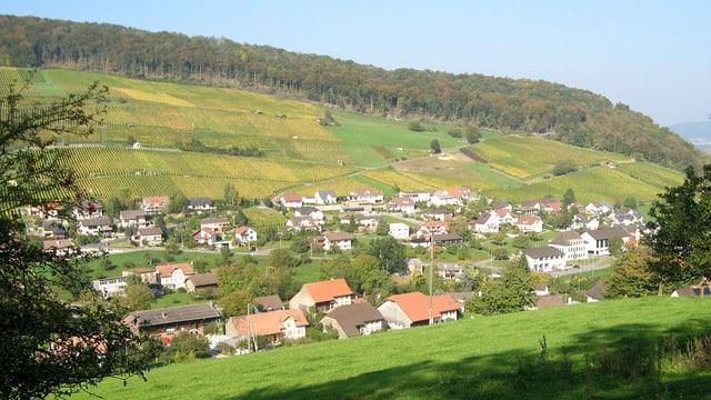 Verschiedene Häuser zwischen Bäumen und Wiesen. Wald im Hintergrund.