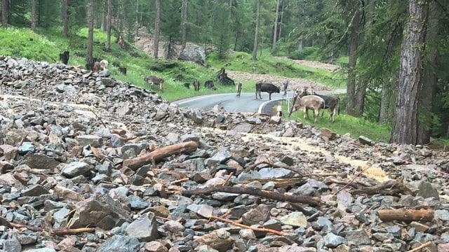 Sbuvaditsch sin la via dal Pass dal Bernina.