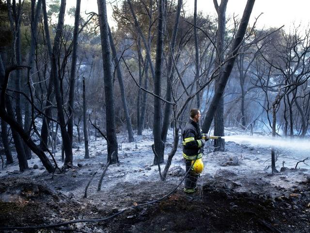 Feuerwehrmann inmitten von verbrannten Bäumen