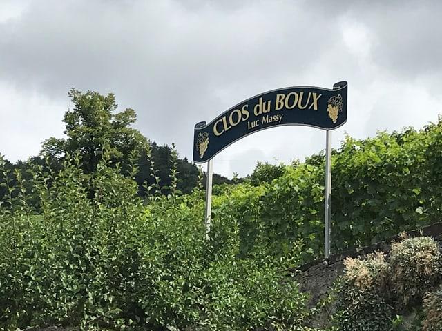 Das Weingut heisst «Clos du Boux » und liegt mitten in den steilen Terrassen des Weinbaugebiets Lavaux.