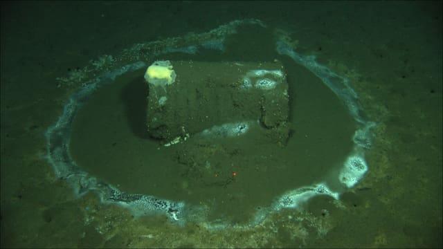 Die Fässer mit dem toxischen Inhalt wurden bereits 2011 an der Küste von Santa Barbara neben Catalina Island entdeckt.