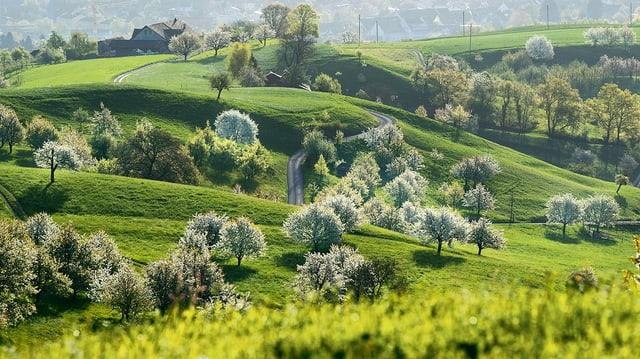Jura-Landschaft mit Kirschbäumen