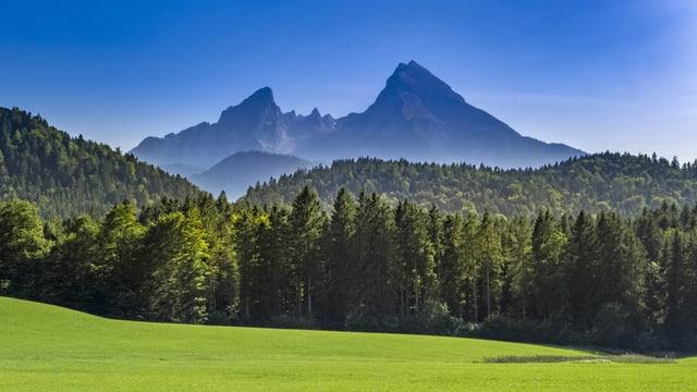 Zwei Bergspitzen, davor ein grosser Nadelwald und eine grüne Wiese. Blauer Himmel.
