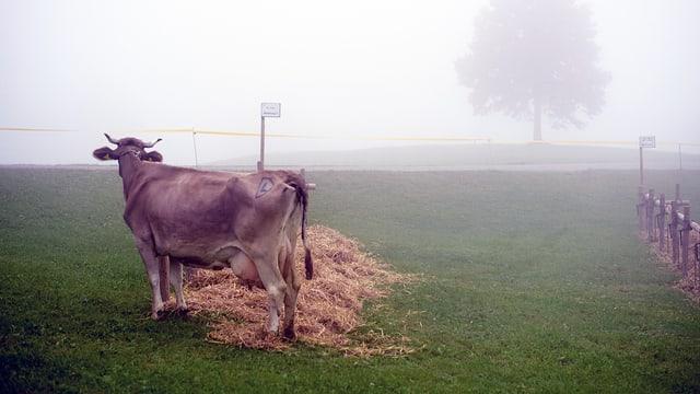 Kuh im Nebel auf einer Wiese