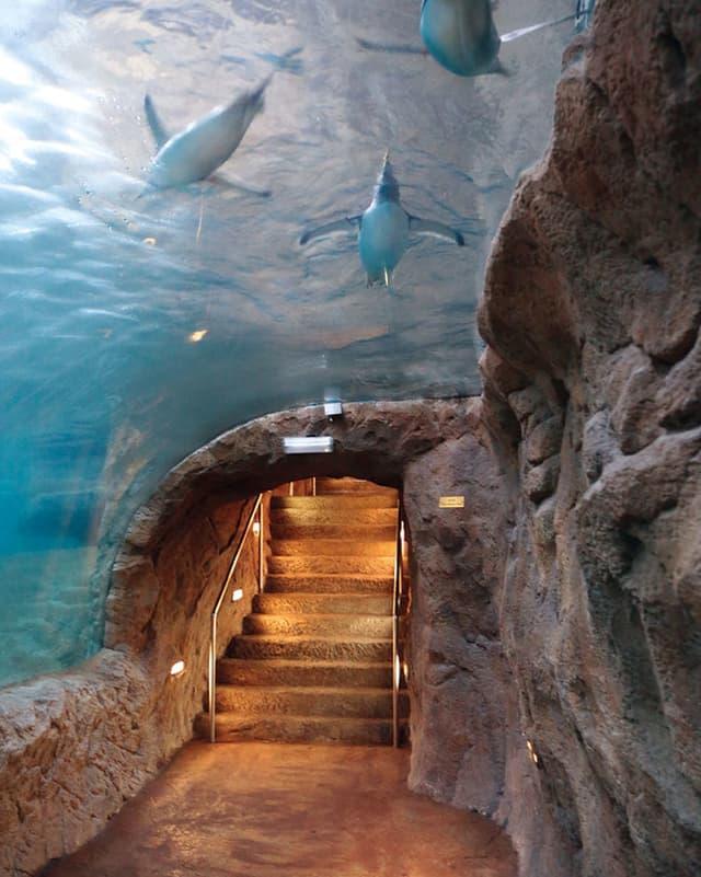 An der Decke eines Höhlengangs blickt man in ein Wasserbecken mit Pingus.