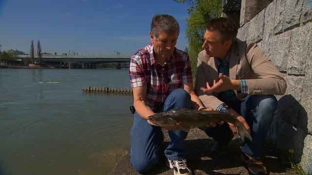 Video «Zander vom Basler Galgenfischer» abspielen