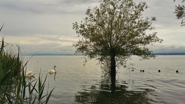 Auch der Bodensee ist nach den Regenfällen im Osten gut gefüllt.