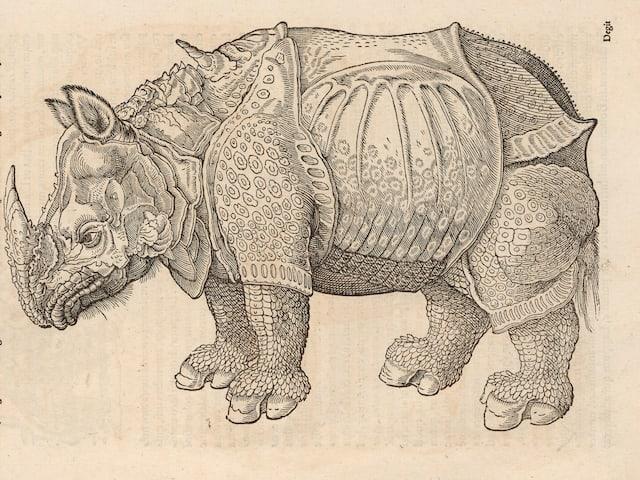 Zeichnerische Darstellung eines Rhinozeros in einem Werk von Conrad Gessner.