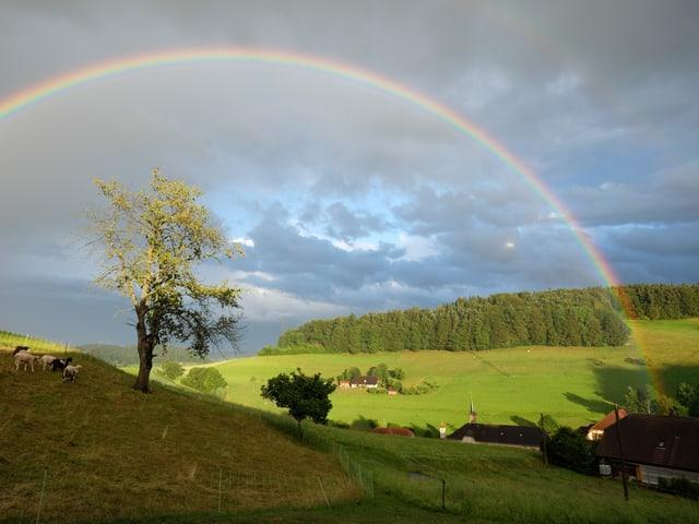 Landschaft mit viel Wiese und Wald im Hintergrund. Bewölkter Himmel mit einem klaren Regenbogen quer über das Foto.