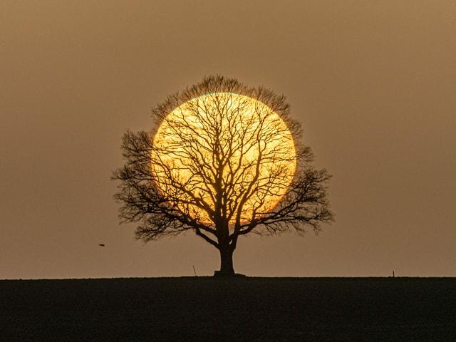 Gelber Himmel mit Saharastaub. Kahler Baum mit grosser Sonnenscheibe.