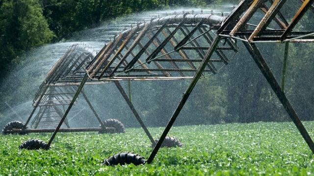 EIn Soja-Feld wird bewässert.