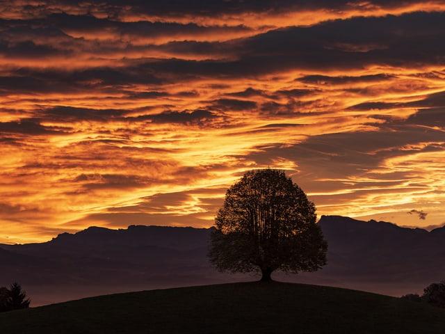 Blick auf einen Baum auf einem Hügel mit Bergen im Hintergrund. Der Himmel scheint zu brennen.